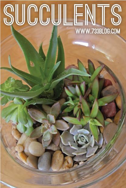 Succulent Dish Garden (Creating & Caring)
