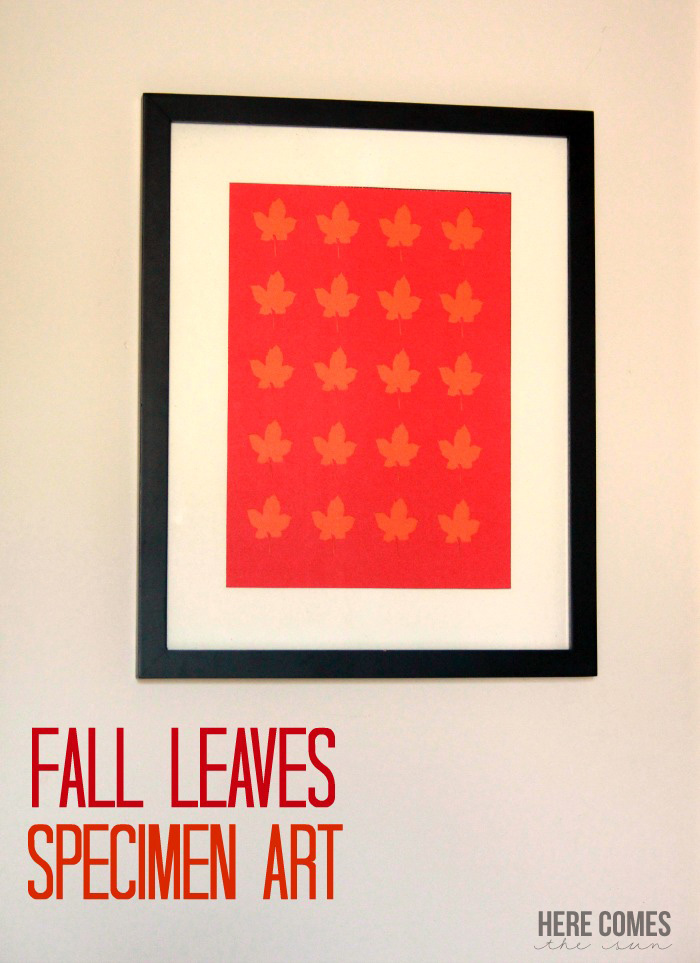 Fall Leaves Specimen Art