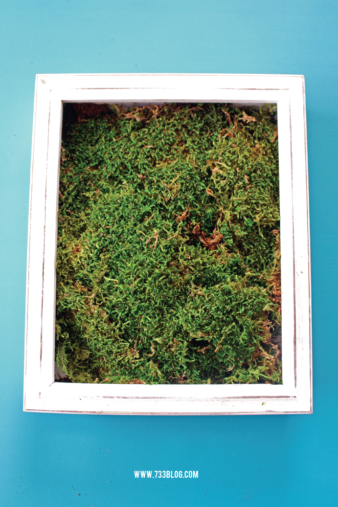 DIY Spring Shadow Box with Moss and Artificial Succulents